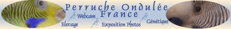Perruche Ondulée France